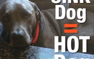 sink dog, ac repair, ac service, air conditioning repair, hvac service,