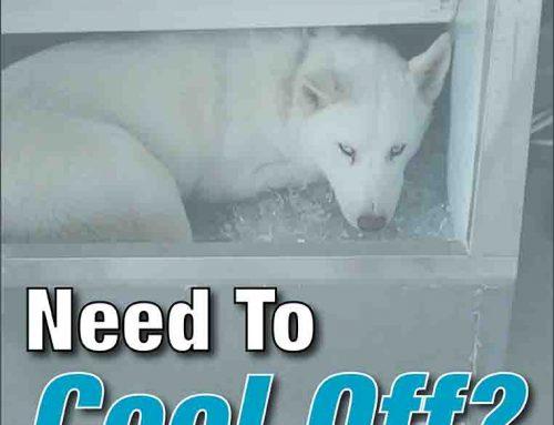 AC Broken Ice Maker Dog