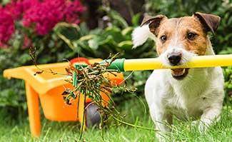 Extreme Comfort Dog spring checklist for hvac system